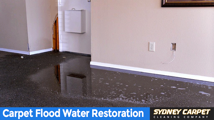 carpet-flood-Water-damage-2