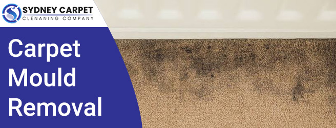 Carpet Mould Removal Removal