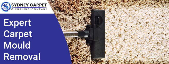 Expert Carpet Mould Removal Sydney